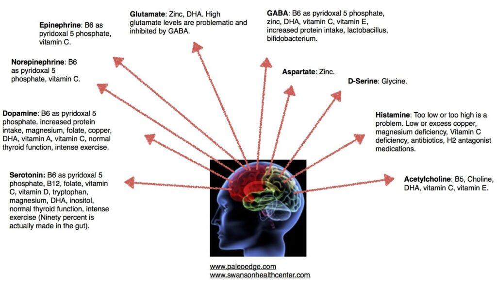 PaleoEdge Neurotransmitter Nutrient Needs