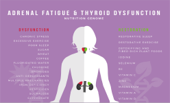 Adrenal Fatigue and Thyroid Connection Solution